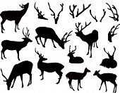 foto of antlers  - illustration with deer and antler silhouettes isolated on white background - JPG
