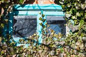 Old Small Wooden Window Surrounded By Ivy