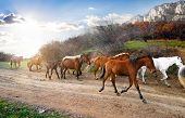 stock photo of wild horse running  - Herd of horses running on the road in mountains - JPG