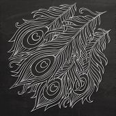 Peacock feathers chalkboard vector