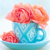 image of blue rose  - Beautiful tea roses in a blue cup on a table - JPG