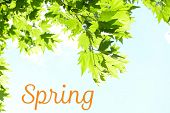 Beautiful spring leaves on tree on sky background. Hello Spring concept
