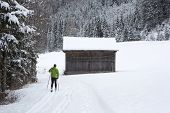 Cross-country Skiers In The Forest