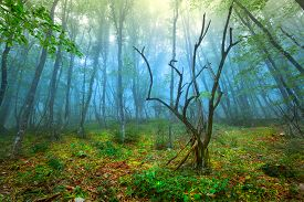 foto of crimea  - Mysterious forest with fog in spring  - JPG
