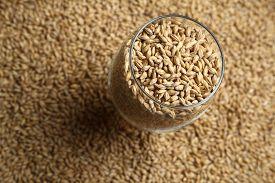 image of malt  - Beer glass full of barley malt standing on malt grains - JPG