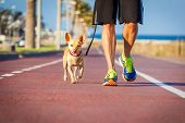 picture of dog-walker  - chihuahua dog close together to owner walking with leash outside at the park as friends - JPG