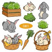 picture of bunny rabbit  - Color set of cute farm animals and objects vector family rabbits - JPG