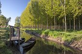 picture of marshes  - typical boats moored at the marsh of Fucecchio Tuscany Italy - JPG