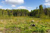 image of deforestation  - Woods logging  stump after deforestation hack woods - JPG