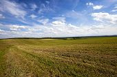 stock photo of harvest  - agriculture field where harvested - JPG