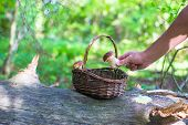 picture of chanterelle mushroom  - Wicker basket full of various kinds of mushrooms in a forest - JPG