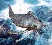 image of exoskeleton  - An illustration of eurypterus exploring sea floor - JPG