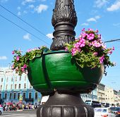 pic of petunia  - Wooden green vase with red petunias on black beautiful cast-iron column
