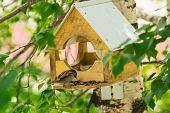 stock photo of manger  - Sparrows in a manger peck sunflower seeds - JPG