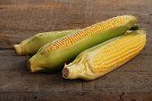 stock photo of corn cob close-up  - close up view of corn cob as background - JPG