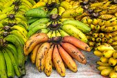image of bunch bananas  - Bunches of ripe bananas on the market - JPG