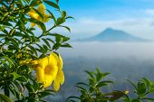 picture of gunung  - Beautiful yellow flower close up with a Merapi volcano on background - JPG