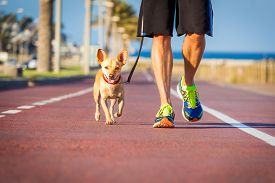 pic of street-walker  - chihuahua dog close together to owner walking with leash outside at the park as friends - JPG