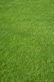 Golf Gras