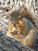 Contented Squirrel