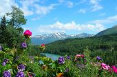 Alaska Mountains And Flowers