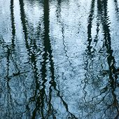 Beautiful Mirroring Of Trees On Water Surface