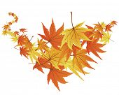 Twisted row of autumn  maples leaves. Vector illustration.