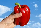 Red Pepper In Hand Against Clouds
