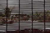 View Of Garden Through Bamboo Curtain