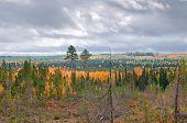 Taiga (borealen Wald)