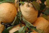 Amalfi limones