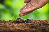 Plant Seeds Planting Trees Growth,the Seeds Are Germinating On Good Quality Soils In Nature poster