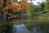 Beautiful Autumnal Scene