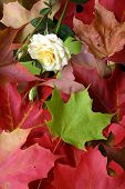 Autumn Leaves Arrangement And One Rose