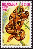 Canceled Nicaraguan Postage Stamp Coiled Snake Red Tailed Boa Constrictor