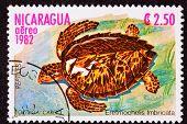 Canceled Nicaraguan Postage Stamp Hawksbill Sea Turtle Eretmochelys Imbricata