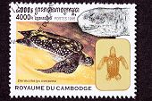 Canceled Cambodian Postage Stamp Swimming Leatherback Sea Turtle, Dermochelys Coriacea