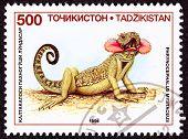 Canceled Tajikistan Postage Stamp Neck Flap Agamid Lizard Phrynocephalus Mystaceus