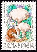 Canceled Hungarian Postage Stamp Meadow Mushroom, Agaricus Campestris