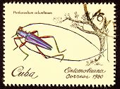 Canceled Cuban Postage Stamp Iridescent Tree Borer Insect Pintheocoelium Columbinum