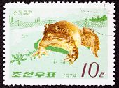 Canceled Korean Postage Stamp Fenced In North American Bull Frog