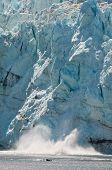 Calving View Of Huge Glacier