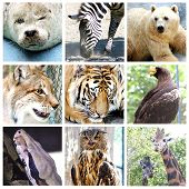 stock photo of zoo animals  - nine wild animals at the zoo mix - JPG