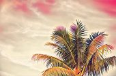 Green Coco Palm Tree On Pink Sky Digital Illustration. Romantic Tropical Vacation Banner Template Wi poster