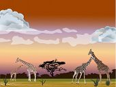 savanna illustration with giraffe and sunset