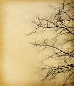 old paper textures. tree without leaves