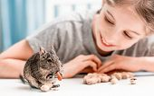 Young girl observe the degu squirrel eats nuts on white table poster