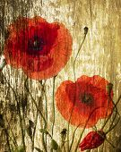 red poppies on a grunge background