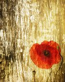 red poppy on a grunge wood background