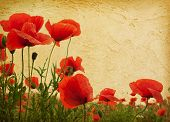 vintage paper textures. Field of poppies
